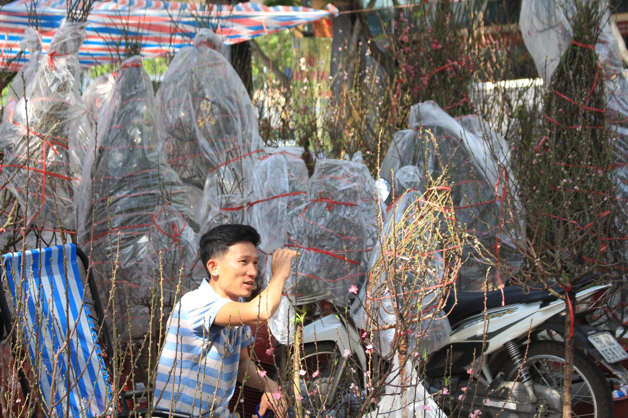 Mai, đào, tắc tiền triệu tại chợ hoa Sài Gòn ngóng người mua, có nhà vườn treo biển đồng giá 100.000 đồng mỗi chậu - Ảnh 7.