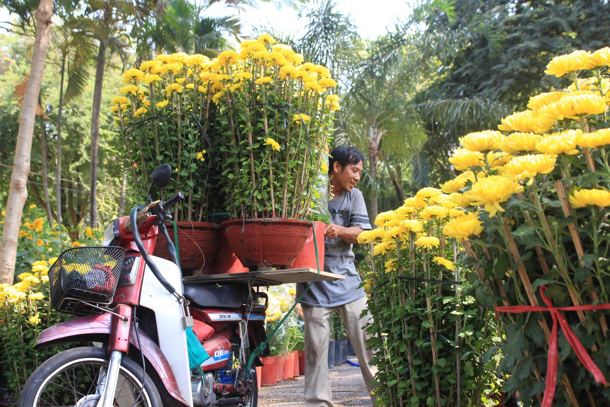 Mai, đào, tắc tiền triệu tại chợ hoa Sài Gòn ngóng người mua, có nhà vườn treo biển đồng giá 100.000 đồng mỗi chậu - Ảnh 14.