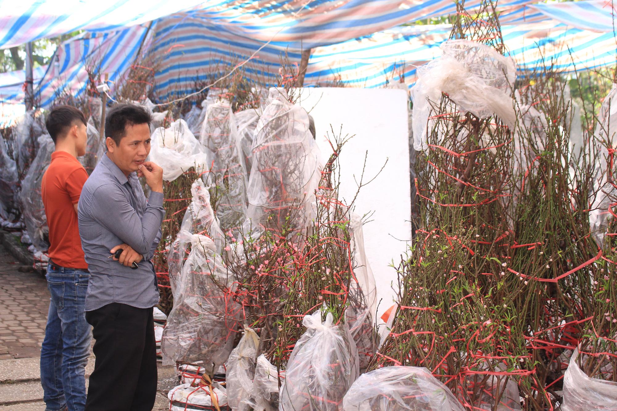 28 Tết, đào Nhật Tân tại chợ hoa Sài Gòn bắt đầu giảm giá, thuận mua vừa bán nên hút khách - Ảnh 2.