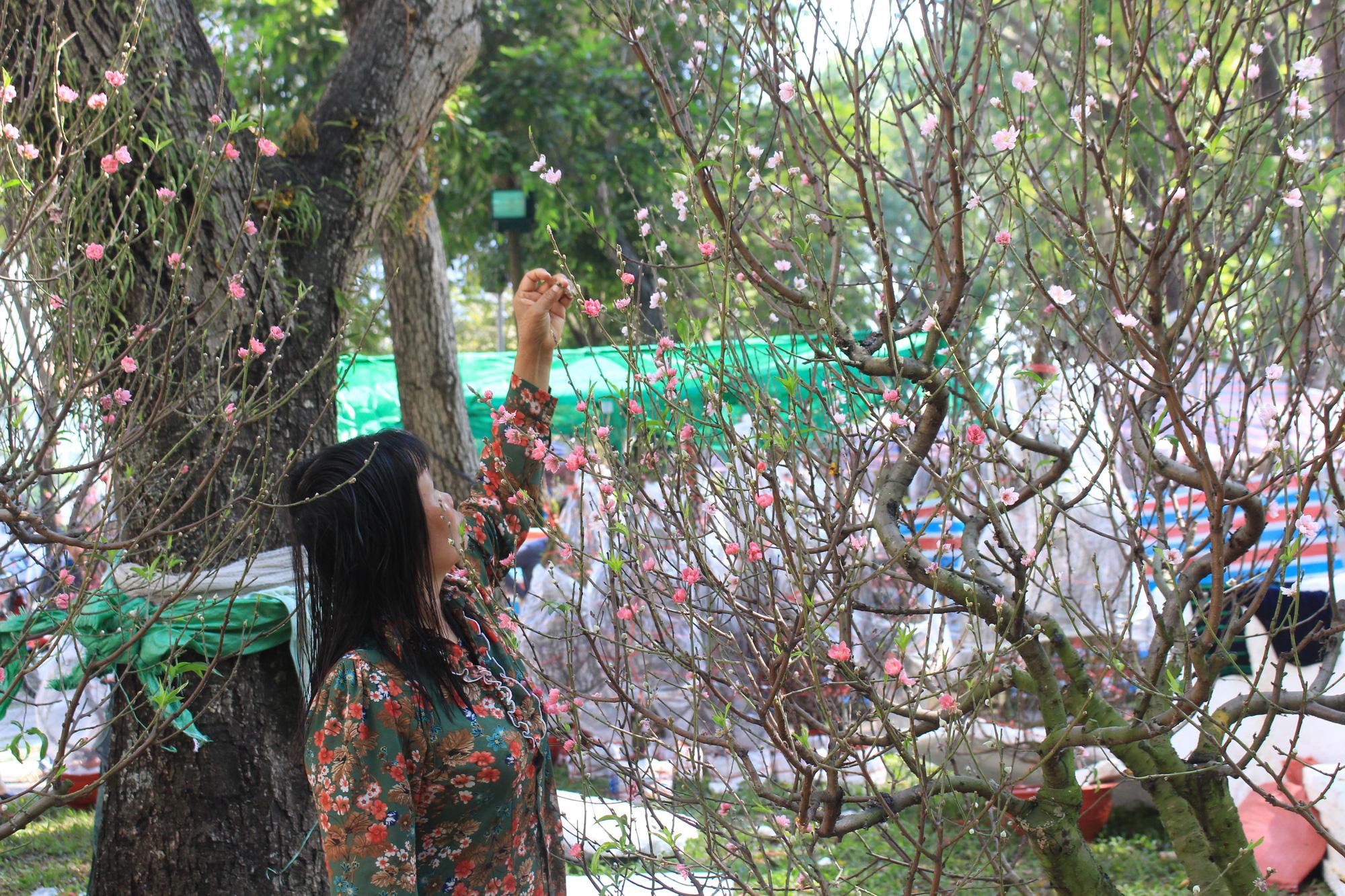 28 Tết, đào Nhật Tân tại chợ hoa Sài Gòn bắt đầu giảm giá, thuận mua vừa bán nên hút khách - Ảnh 5.