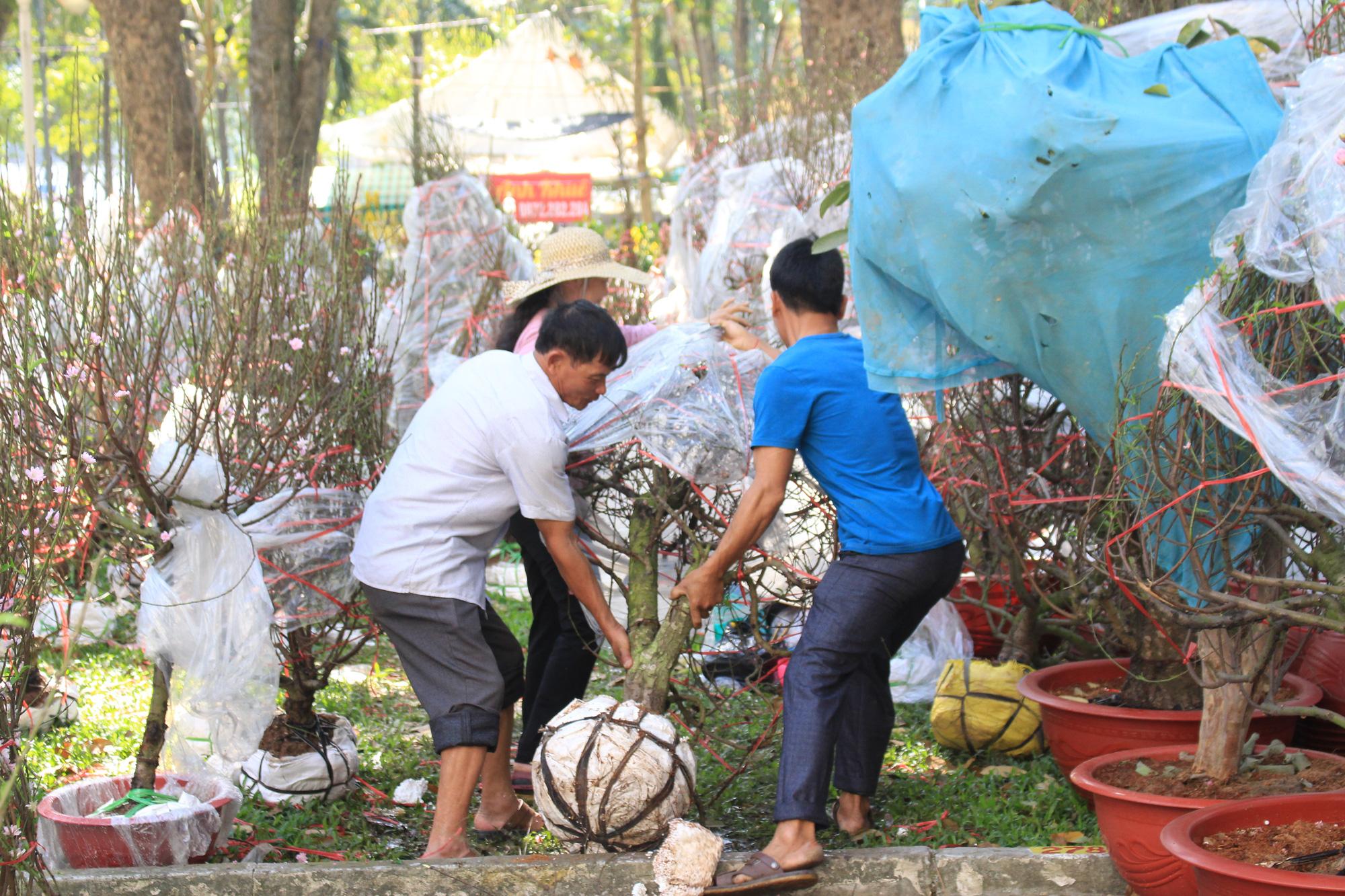 28 Tết, đào Nhật Tân tại chợ hoa Sài Gòn bắt đầu giảm giá, thuận mua vừa bán nên hút khách - Ảnh 10.