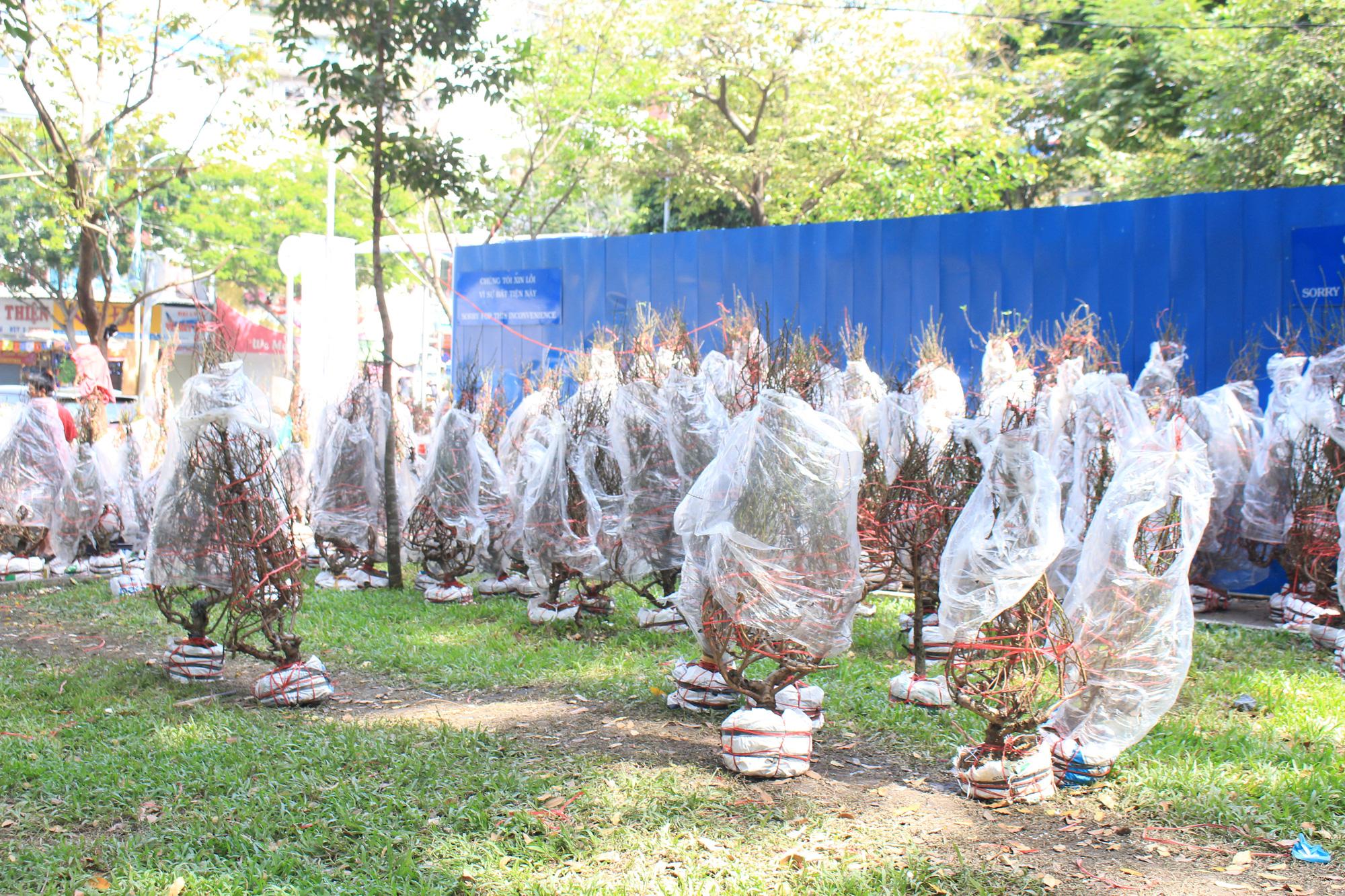 Trưa 30 Tết, mai, đào, hướng dương bán rẻ như cho 50.000 đồng một cây ở chợ hoa Sài Gòn - Ảnh 7.