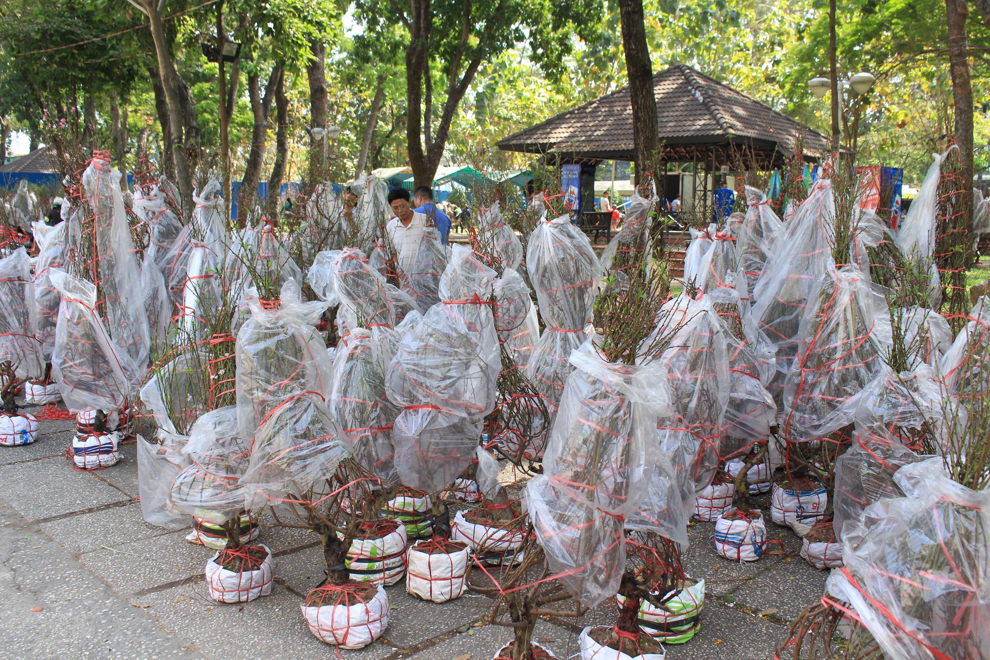 Trưa 30 Tết, mai, đào, hướng dương bán rẻ như cho 50.000 đồng một cây ở chợ hoa Sài Gòn - Ảnh 6.