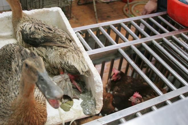 Bên trong khu chợ bùng phát virus corona tại Vũ Hán - Ảnh 9.
