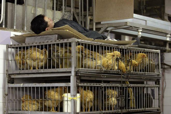 Bên trong khu chợ bùng phát virus corona tại Vũ Hán - Ảnh 10.