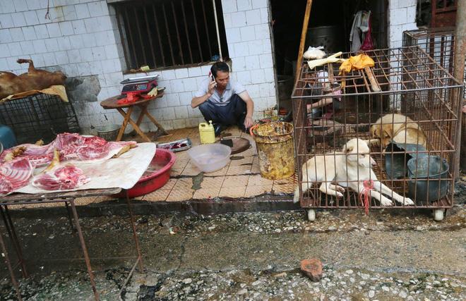 Bên trong khu chợ bùng phát virus corona tại Vũ Hán - Ảnh 2.