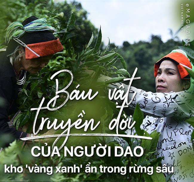 'Kho vàng' ẩn trong rừng sâu, báu vật 500 tuổi ở Hà Giang - Ảnh 1.