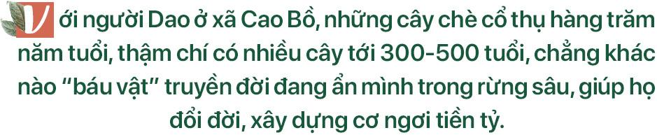 'Kho vàng' ẩn trong rừng sâu, báu vật 500 tuổi ở Hà Giang - Ảnh 2.