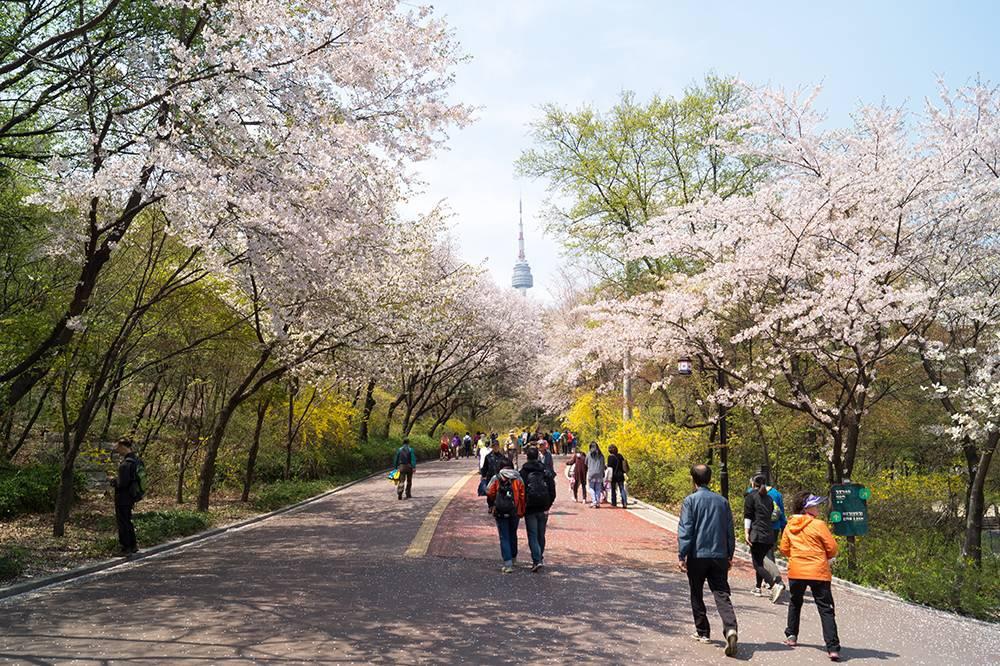 Gợi ý 5 địa điểm du lịch mùa xuân hấp dẫn tại Hàn Quốc - Ảnh 1.