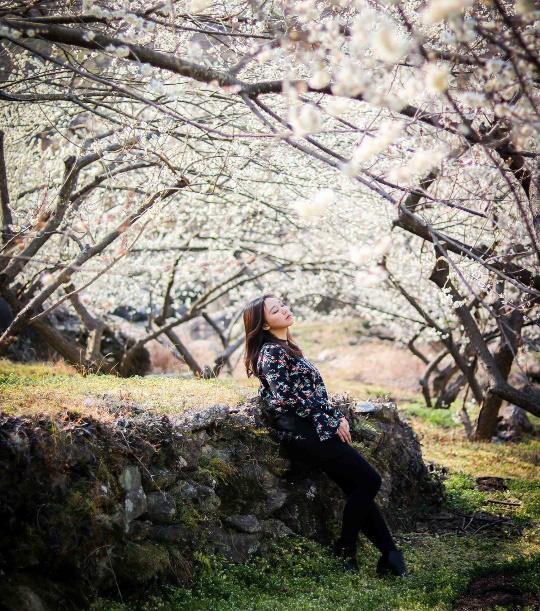 Gợi ý 5 địa điểm du lịch mùa xuân hấp dẫn tại Hàn Quốc - Ảnh 2.