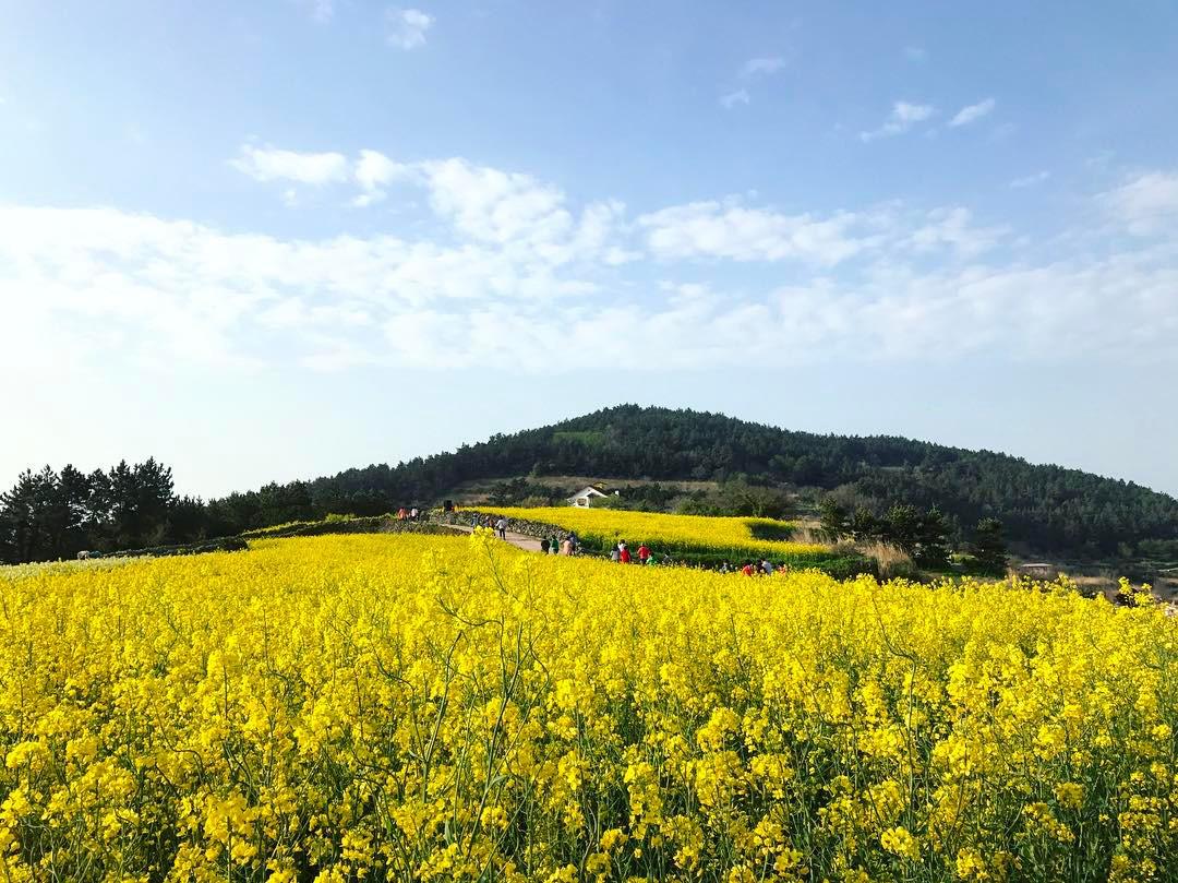 Gợi ý 5 địa điểm du lịch mùa xuân hấp dẫn tại Hàn Quốc - Ảnh 4.