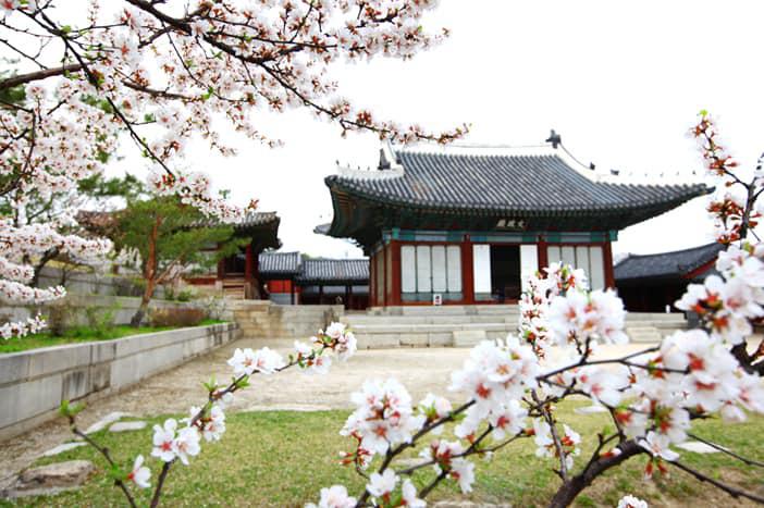Gợi ý 5 địa điểm du lịch mùa xuân hấp dẫn tại Hàn Quốc - Ảnh 5.