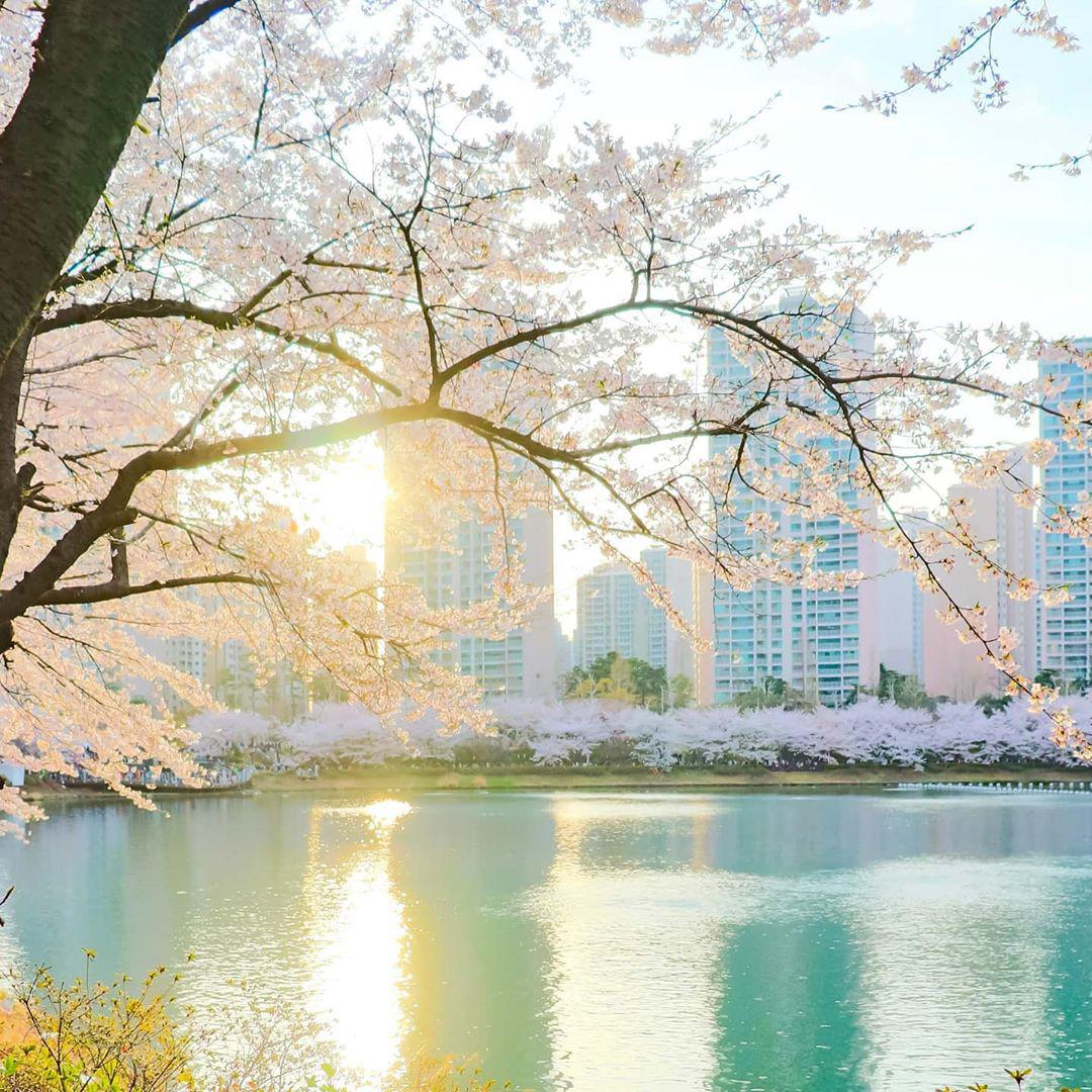 So sánh tour du lịch Hà Nội - Hàn Quốc mùa xuân 5 ngày 4 đêm - Ảnh 10.