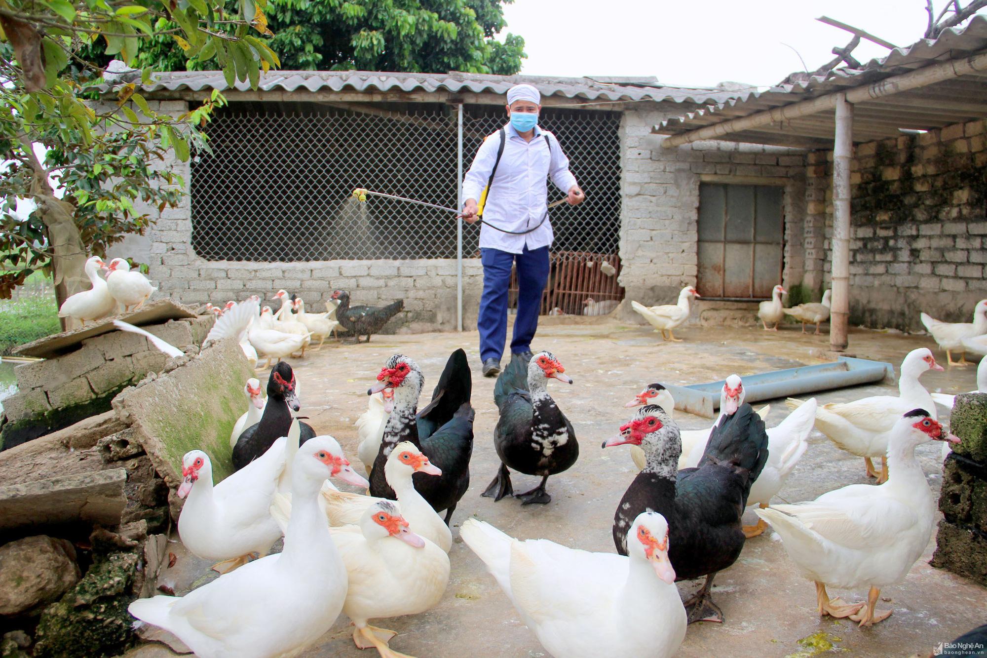 Xử lí nghiêm buôn lậu, vận chuyển gia cầm trái phép phòng cúm A/H5N1 từ Trung Quốc vào Việt Nam - Ảnh 1.