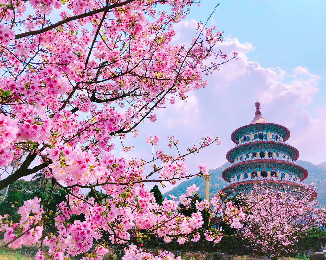 Những địa điểm đẹp để ngắm hoa anh đào tại châu Á 2020 - Ảnh 4.