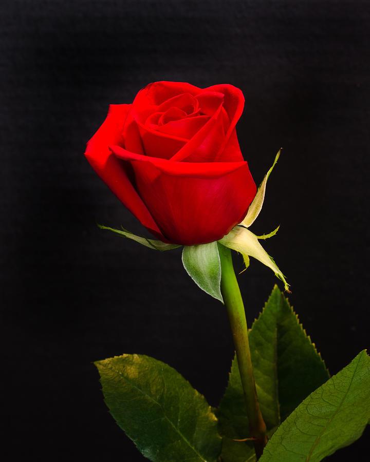 Lời chúc Valentine độc đáo và ngọt ngào nhất cho Vợ 2020 - Ảnh 2.