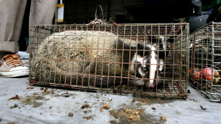 Ăn thịt thú hoang dã - thói quen nghìn năm làm hại người Trung Quốc - Ảnh 1.