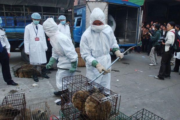 Ăn thịt thú hoang dã - thói quen nghìn năm làm hại người Trung Quốc - Ảnh 2.