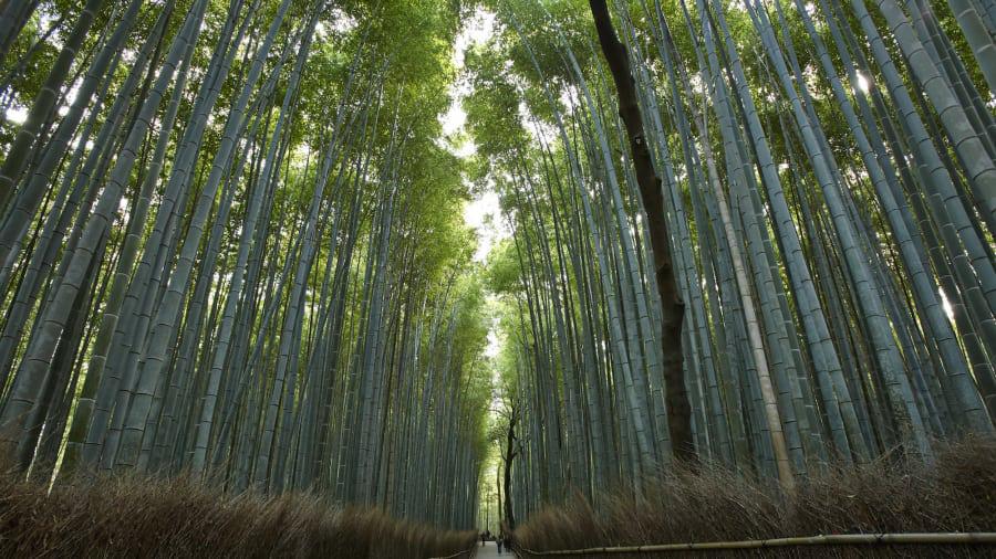 Nhật Bản kích cầu với chiến dịch 'du lịch vắng' trước ảnh hưởng của virus corona  - Ảnh 3.