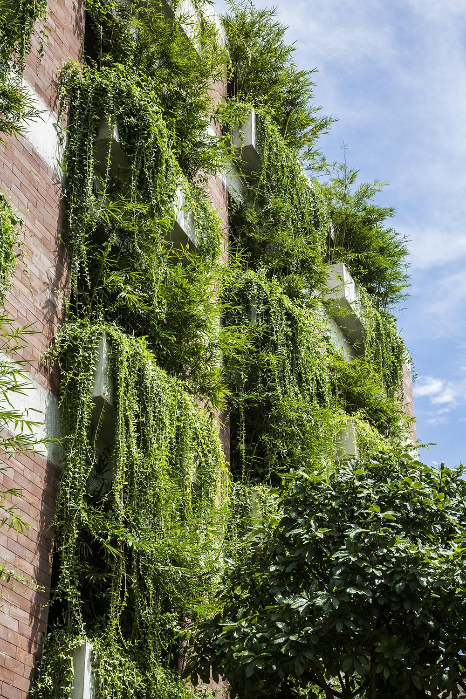 Tòa nhà 5 tầng 'siêu độc' phủ kín cây xanh ở Đà Nẵng, được báo Tây hết lời khen ngợi - Ảnh 3.
