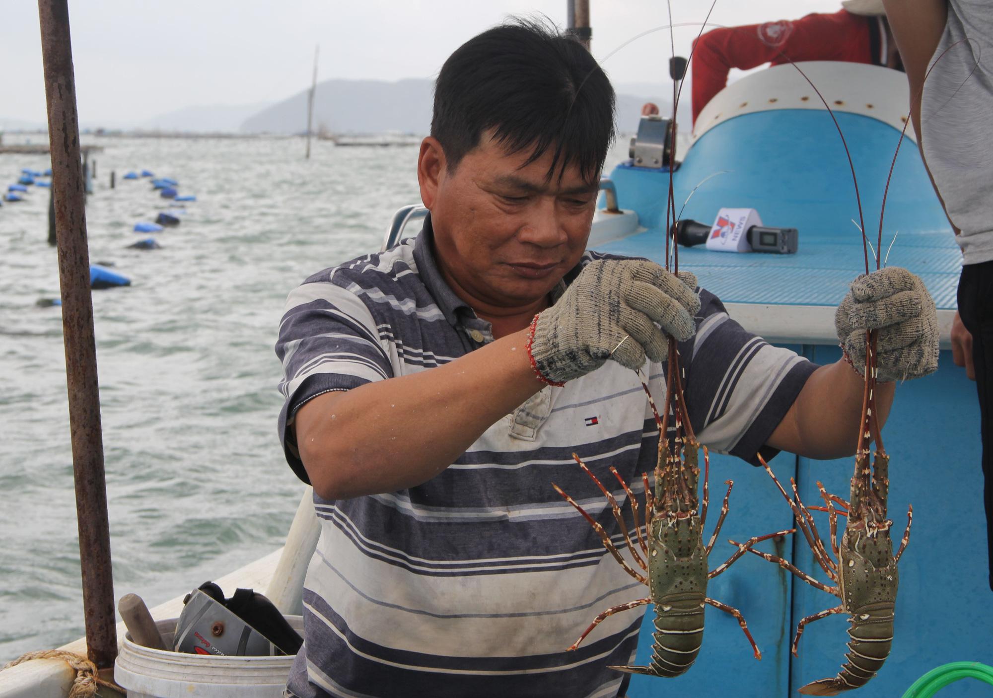 Sự thật về giá tôm hùm ở Phú Yên chỉ 200.000 đồng/kg - Ảnh 4.