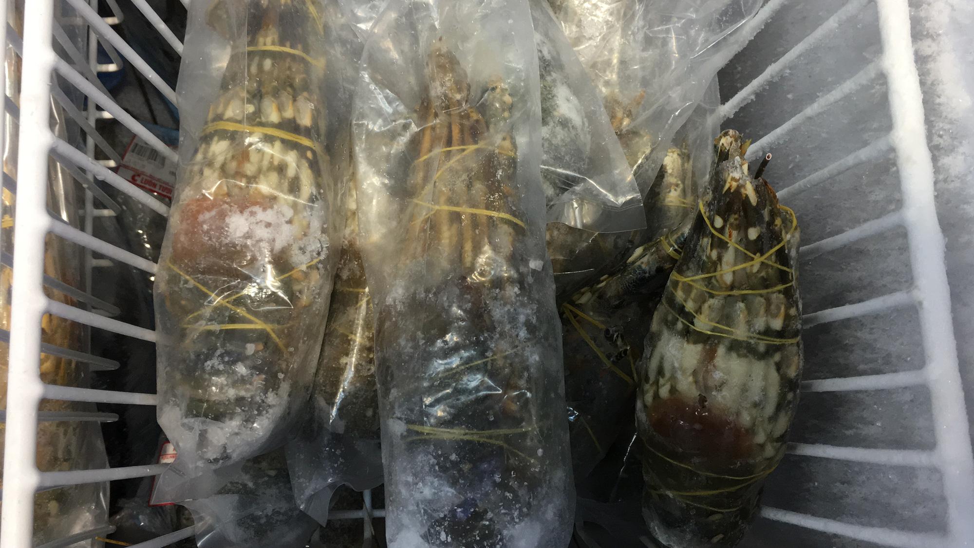 Giải cứu tôm hùm ở Đà Nẵng: Sức mua nhẹ, người dân muốn mua loại còn sống nhưng chỉ có hàng đông lạnh - Ảnh 5.