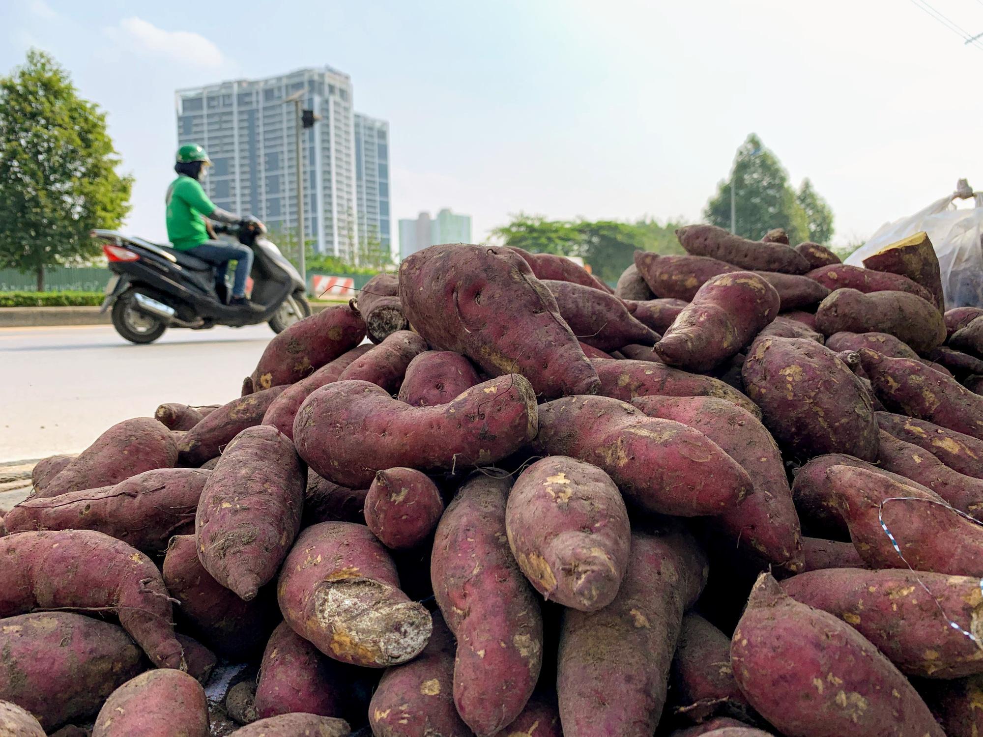 Hàng trăm tấn khoai lang nằm dài trên đường phố Hà Nội chờ 'giải cứu' - Ảnh 3.