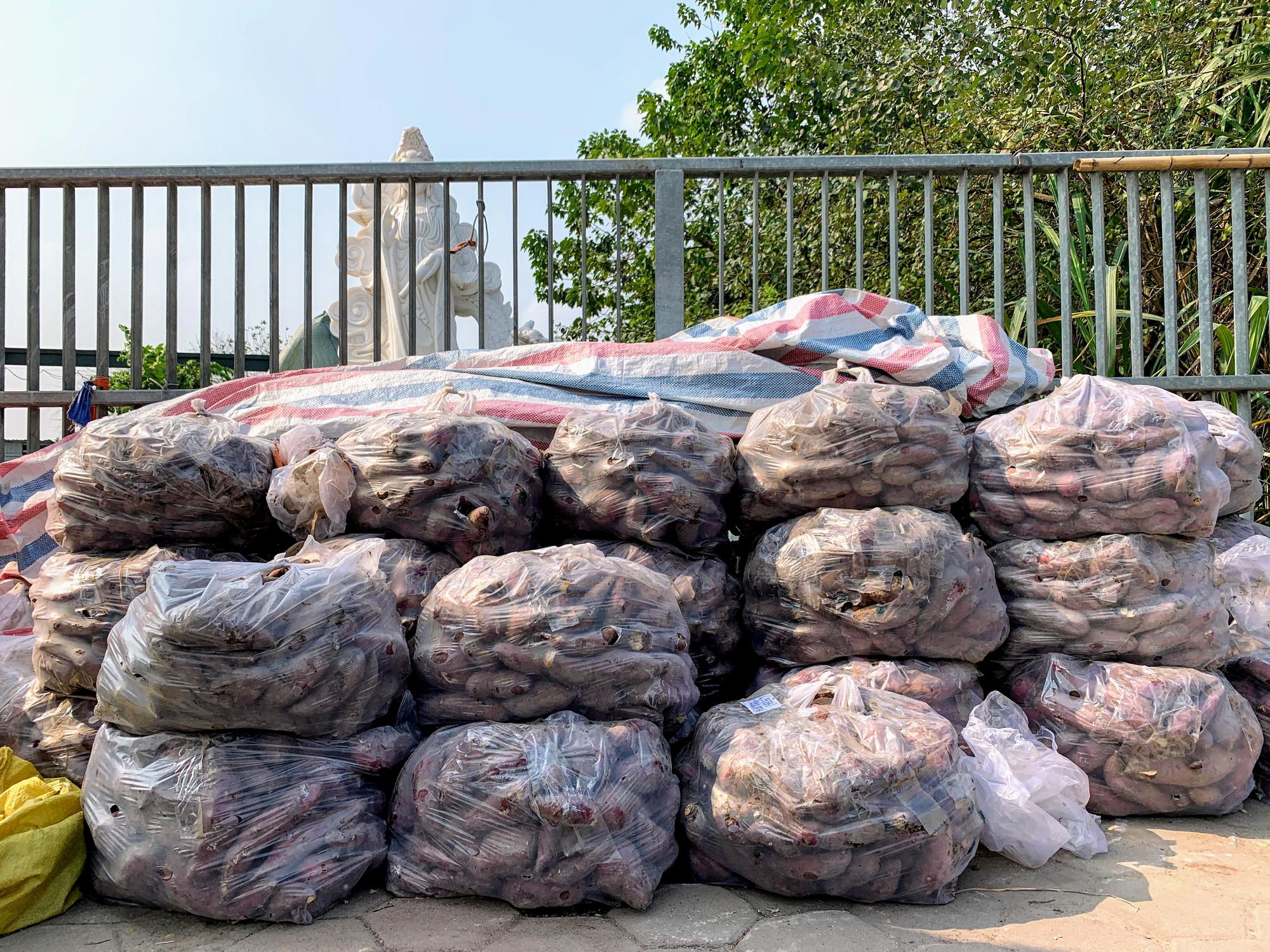 Hàng trăm tấn khoai lang nằm dài trên đường phố Hà Nội chờ 'giải cứu' - Ảnh 11.