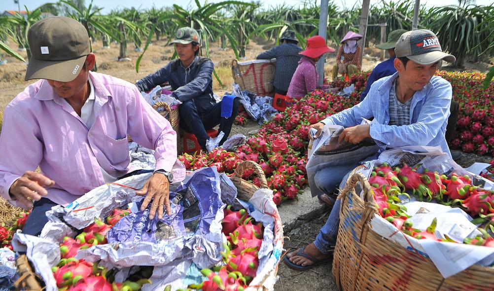 Sẽ tính toán gói hỗ trợ cho doanh nghiệp, nông dân trồng thanh long, dưa hấu… bị ảnh hưởng bởi dịch virus corona - Ảnh 2.