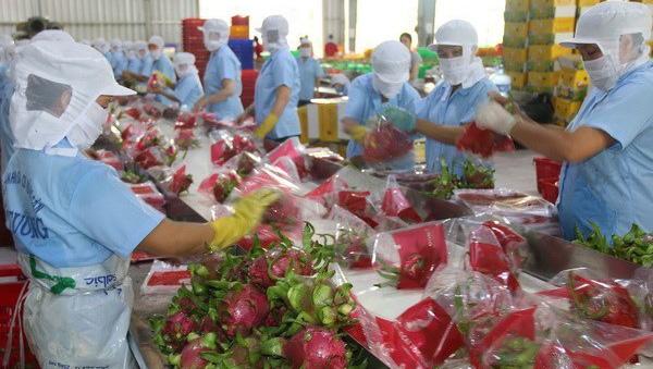 Châu Âu đóng cửa biên giới vì dịch Covid-19, doanh nghiệp xuất nhập khẩu Việt Nam có bị ảnh hưởng? - Ảnh 2.