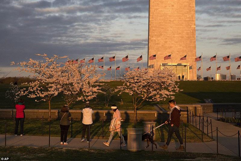 Bất chấp dịch corona, hàng trăm người vẫn đổ về Washington DC để ngắm hoa anh đào - Ảnh 7.
