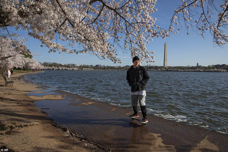Bất chấp dịch corona, hàng trăm người vẫn đổ về Washington DC để ngắm hoa anh đào - Ảnh 6.
