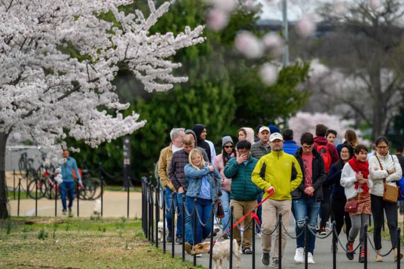Bất chấp dịch corona, hàng trăm người vẫn đổ về Washington DC để ngắm hoa anh đào - Ảnh 2.