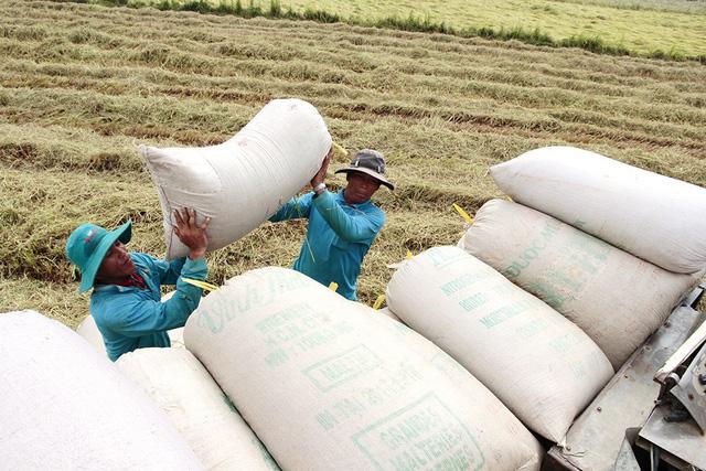 Thủ tướng yêu cầu khẩn tạm dừng kí hợp đồng xuất khẩu gạo mới - Ảnh 1.