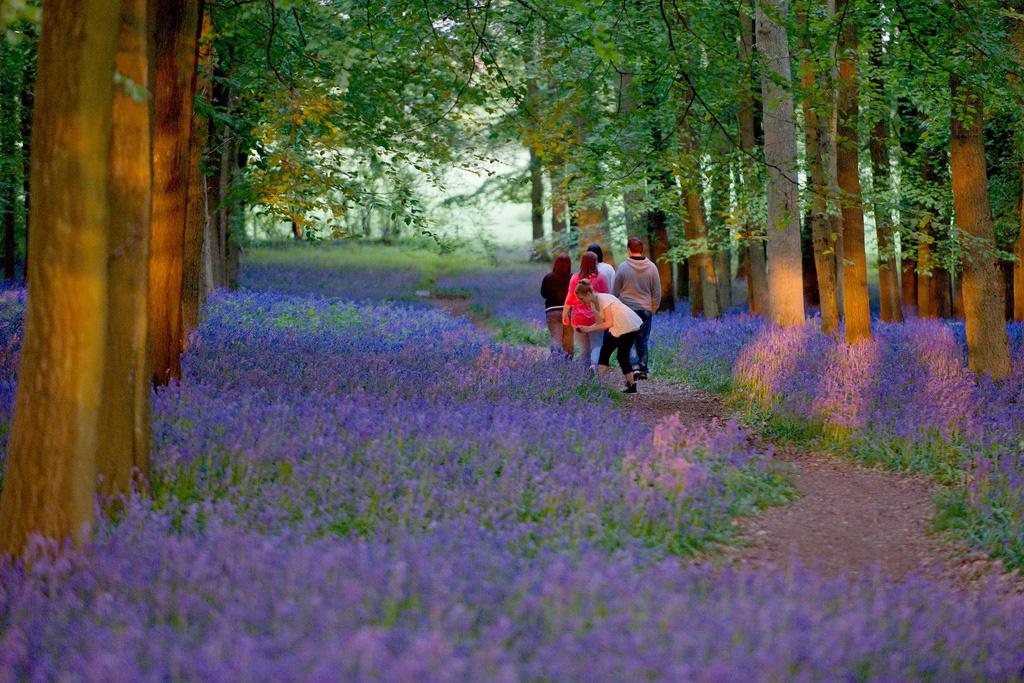 Miễn phí vé tham quan tại hàng loạt các công viên ở Anh giữa mùa dịch corona - Ảnh 1.