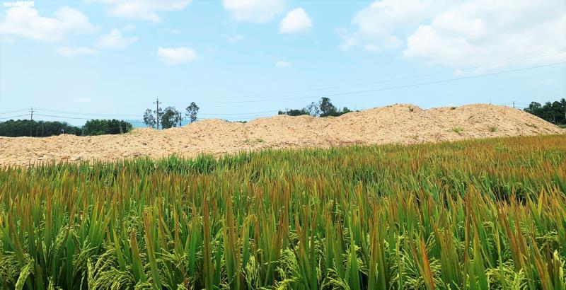 Phạt 300 triệu đồng doanh nghiệp san lấp đất trồng lúa của dân làm dự án - Ảnh 1.
