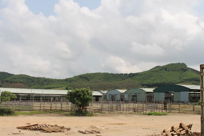Nhìn lại toàn cảnh dự án nuôi bò nghìn tỉ tai tiếng của Công ty Bình Hà - Ảnh 1.