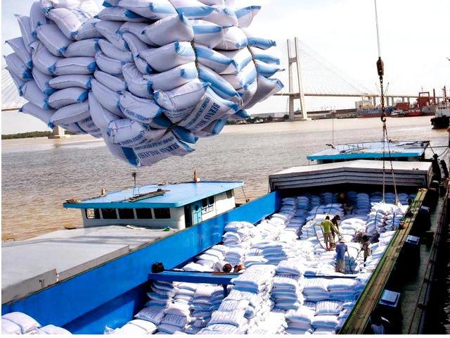 Doanh nghiệp: Chúng tôi sẽ 'chết' nếu ngừng xuất khẩu gạo quá lâu - Ảnh 2.