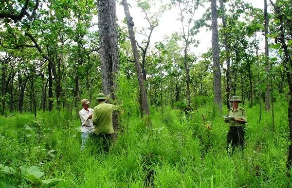 Ban hành Qui định khung giá các loại rừng trên địa bàn thành phố Hà Nội - Ảnh 1.