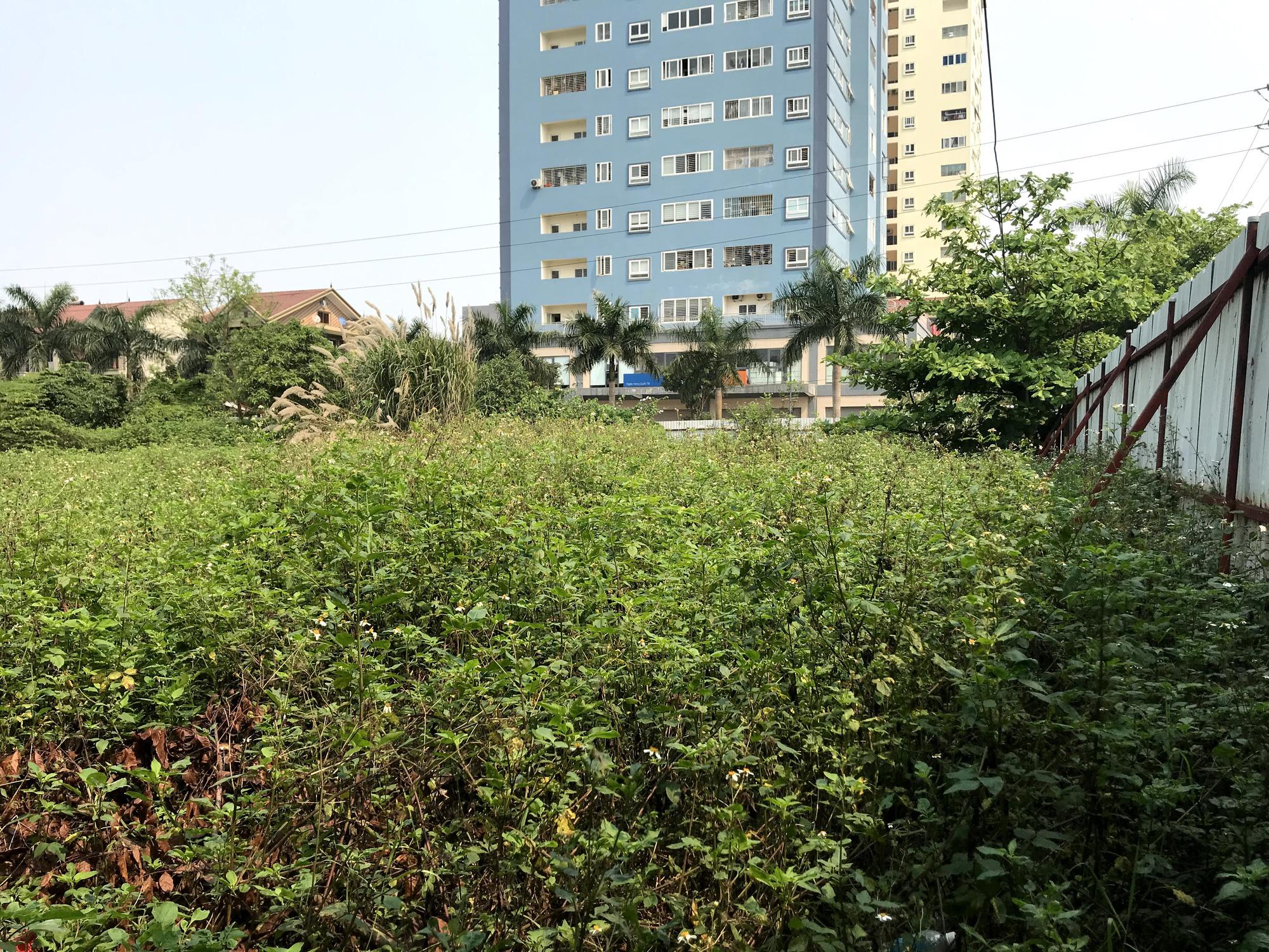 Nghệ An: Đất dự án hơn 1,1 ha ở TP Vinh bị bỏ hoang suốt 13 năm - Ảnh 12.