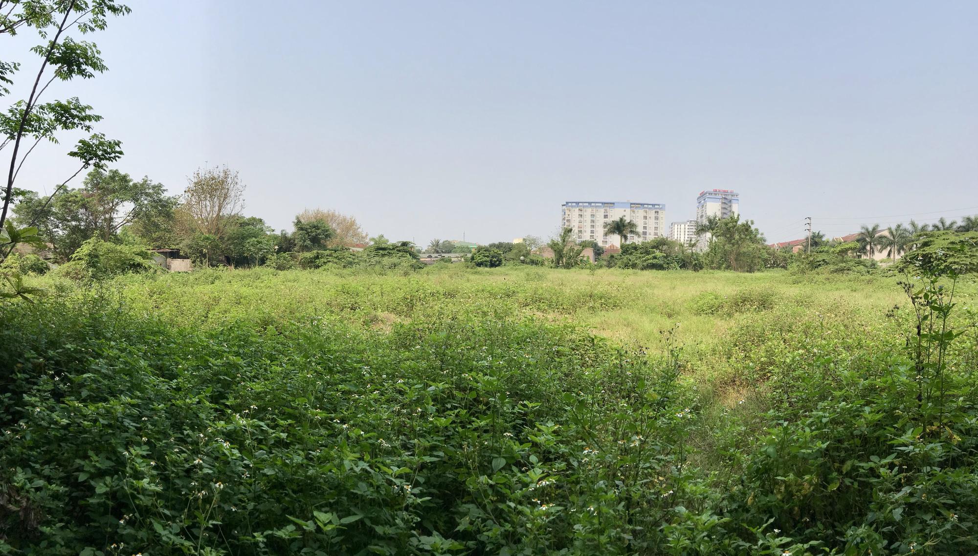 Nghệ An: Đất dự án hơn 1,1 ha ở TP Vinh bị bỏ hoang suốt 13 năm - Ảnh 7.