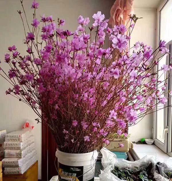 se ra soat nguy co tu hoa do quyen ngu dong tao bonsai