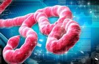 protein o nguoi co the chong lai vi rut ebola