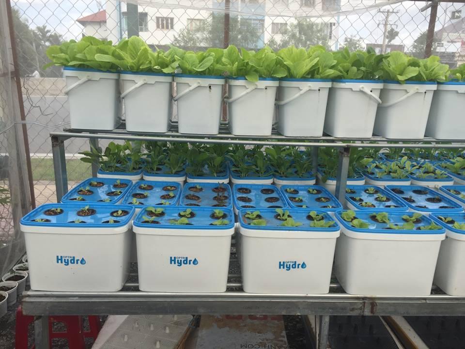 khu vuon 10m2 du loai rau xanh muot nho phuong phap trong thuy canh