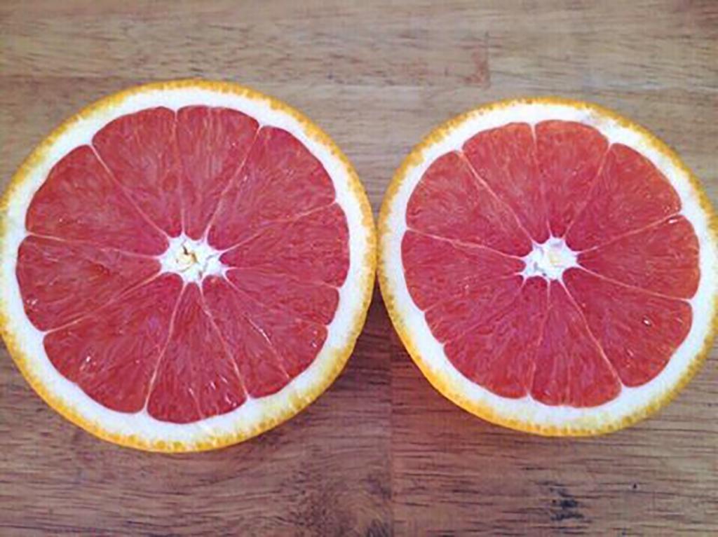 Kết quả hình ảnh cho kỹ thuật trồng cam cara ruột đỏ
