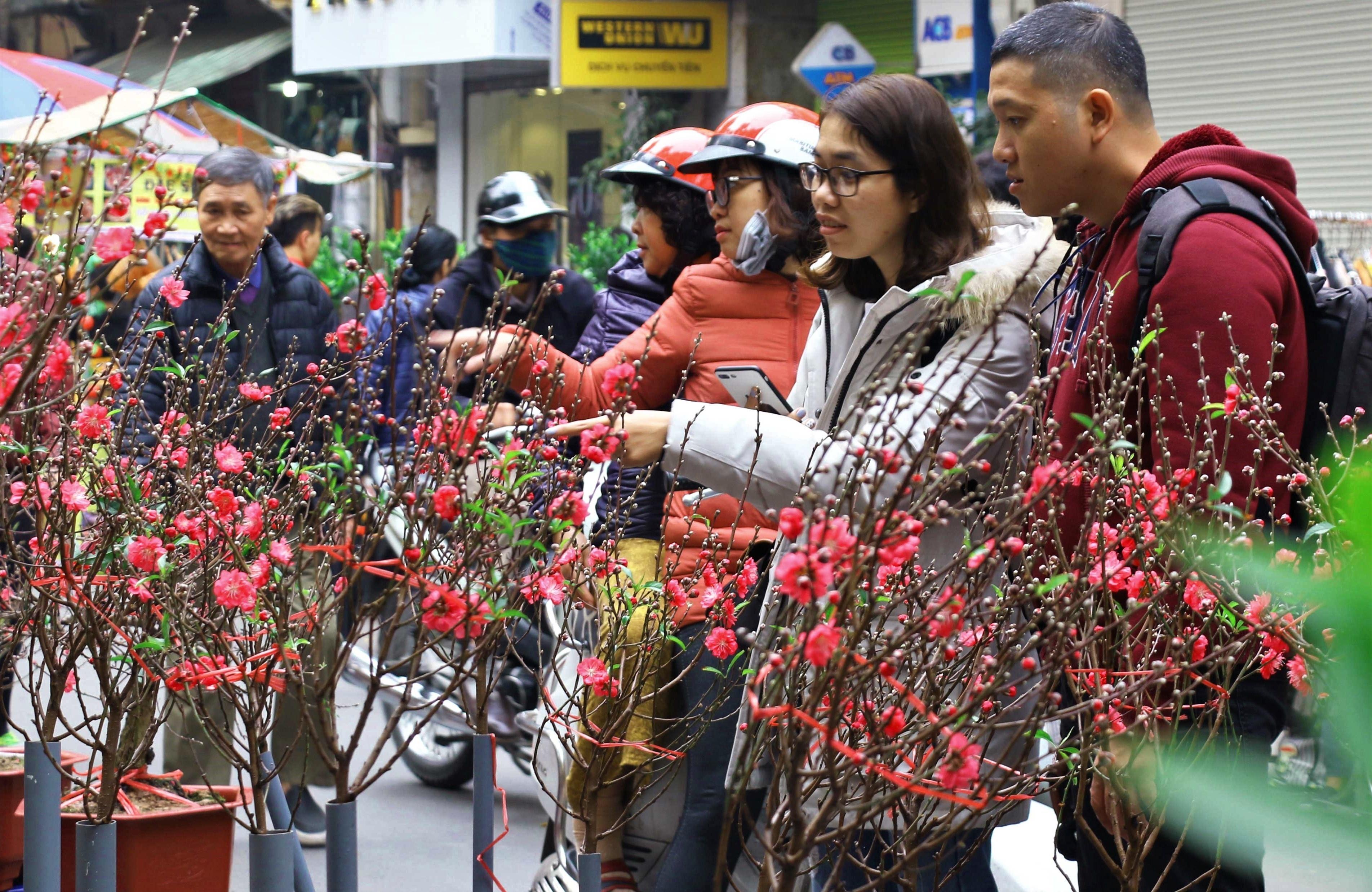 Đón Tết Nguyên đán 2019 sớm ở chợ hoa lâu đời nhất Hà Nội