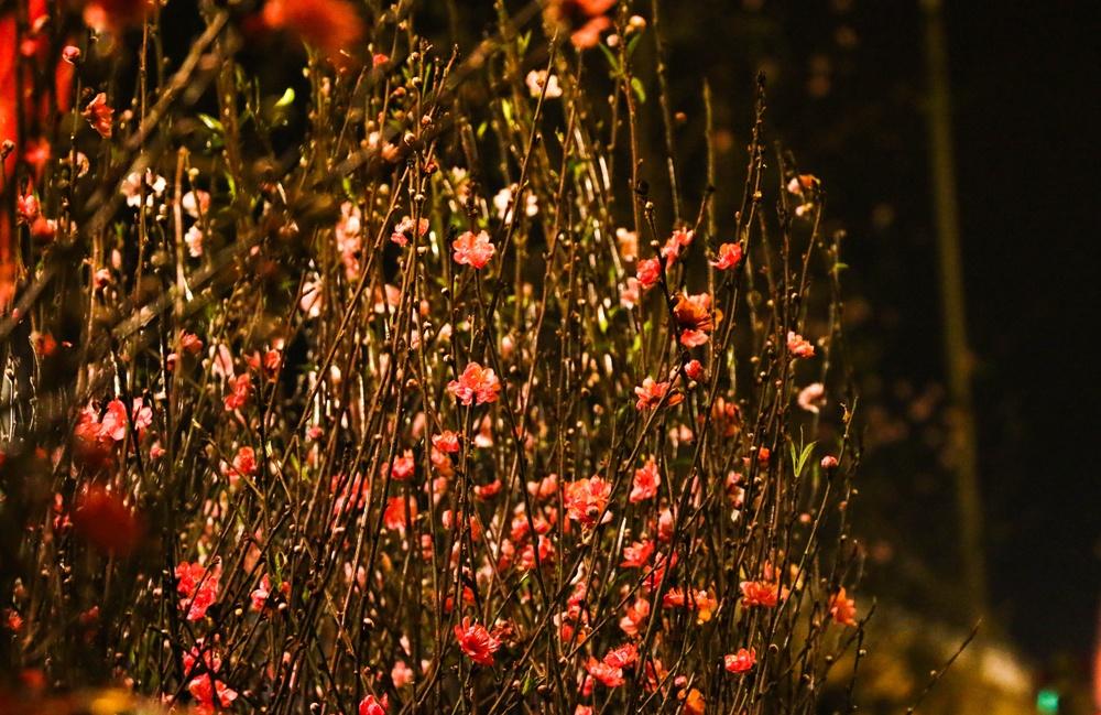 dem khong ngu o cho hoa lon nhat ha noi ngay sat tet nguyen dan 2019