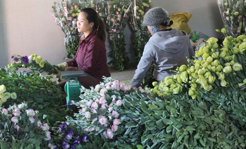 hoa tet da lat gia cao rau re