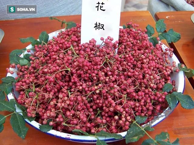 10 dieu nhat dinh phai lam cung le minh phuong sing my song tai phuong hoang co tran