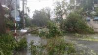 Chùm ảnh: Bão số 12 càn quét, nhiều nhà bị tốc mái, cây cối bị quật đổ ngang đường
